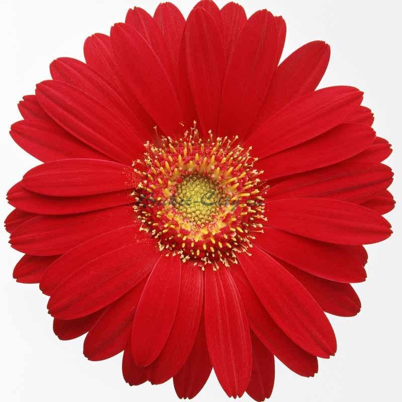 Фото картинки цветов для детей