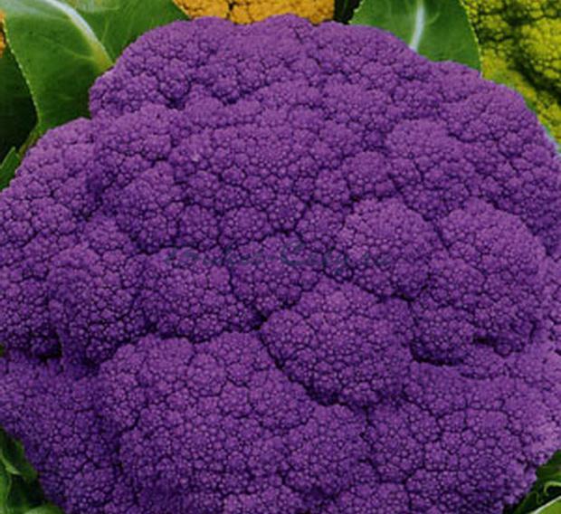 капуста с фиолетовыми листьями